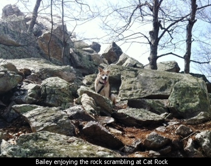 Bailey enjoying the rock scrambling at Cat Rock
